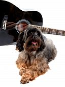 Decorative Doggie And Guitar.