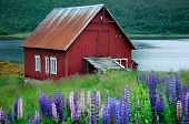 Norway Scenery