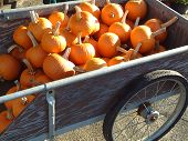 Wagon Of Pumpkins