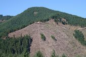 Clearcut Logging