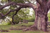 stock photo of swing  - Toned image of large oak tree with a swing hanging from its limb - JPG