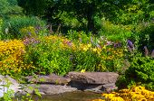 picture of butterfly-bush  - Butterfly garden with cutleaf coneflowers and butterfly bush and water decor - JPG