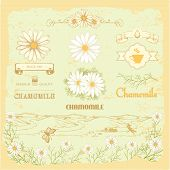 chamomile,  herb on flower background