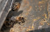 pic of bee keeping  - close up of the bees on hive at hole - JPG