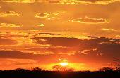 African Sunset Background - Golden Mystic Beauty