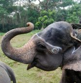 elefante de sorriso