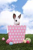 Adorable Little Bunny Rabbit in Pink Polka Dot Basket
