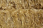 Golden Hay Stack; Close-up