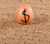 stock photo of sand dollar  - Image of big white egg with dollar sign on a sand - JPG