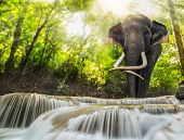 stock photo of tropical plants  - Erawan Waterfall with an elephant Kanchanaburi Thailand - JPG