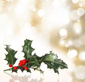 Christmas background with Ilex branch