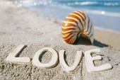 nautilus shell with love message on Florida beach  under the sun light shallow dof