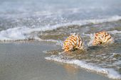 two nautilus shell with sea wave,  Florida beach  under the sun light, live action