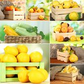 Collage of fruits and vegetables in wooden boxes