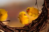 Yellow Easter Chickens Dancing On Some Twigs