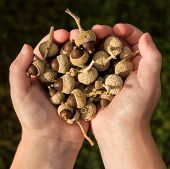 Handful Nut Seeds