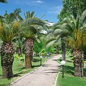 Beautiful palm alley in the park
