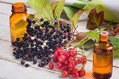 pic of elderberry  - Fresh elderberry viburnum medicines on wooden background - JPG