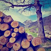 image of afforestation  - Sawed Firewood in the Swiss Alps Photo Filter - JPG