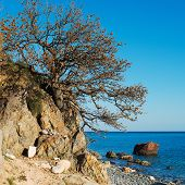 picture of centenarian  - Crimean tree over sea landscape in nature daytime summer - JPG