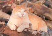 Orange and white tomcat on top of a wood pile in late evening sun