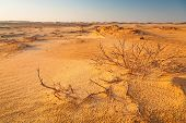 Sandy desert near Abu Dhabi, United Arab Emirates