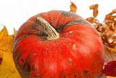 Ripe Pumpkin In Autumn Leaves