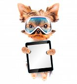 dog  dressed as skier with tablet pc