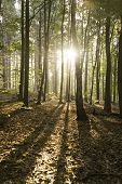 Sunrise Throught The Autumn Woods