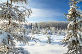 Winter Landscape With The Forest  And Blue Sky