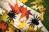Fall Leaves and Spiders