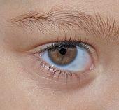 brown eye of child