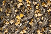 Natural Background And Texture. Thick Bark With Fallen Autumn Leaves