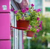 Purple flowers in pots on a purple wall