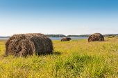 Mop Harvested Hay