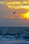 Pelican Soaring Over The Sea At Sunset