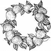 ink drawing apple wreath
