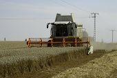 foto of threshing  - The big harvesting machine harvest the crop - JPG
