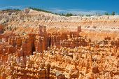 Bryce Canyon In A Sunny Summer Day