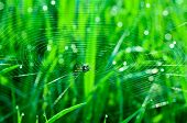 Natural background with a spider on web on grass backgbaund