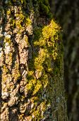 tree bark in moss