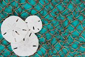 stock photo of sand dollar  - Blank antique teal blue aged wooden sign and fish netting background with collage of sand dollars - JPG