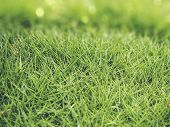 Grass On Bokeh Background