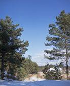 Estonian winter northern forest landscape