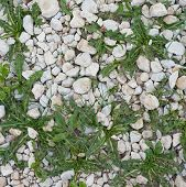 Stone pebble and grass