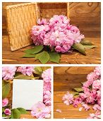 Collage Of Photos Cherry Blossoms.
