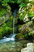 Wellspring at Tara mountain and national park