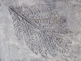 picture of paleozoic  - big gray print beautiful plant leaf with veins in solid rock - JPG