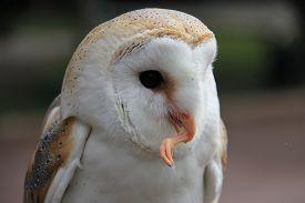 pic of raid  - An owl eats its prey after a raid - JPG
