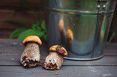 image of edible mushrooms  - wild edible orange cap boletus mushrooms on wooden bench - JPG